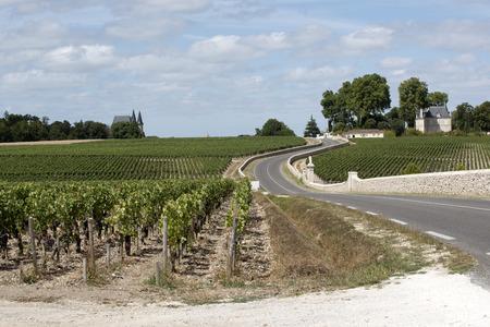 bordeaux region: Pauillac wine region France - August 2016 - Vines and vineyards in Pauillac a wine producing area of the Bordeaux region France Editorial