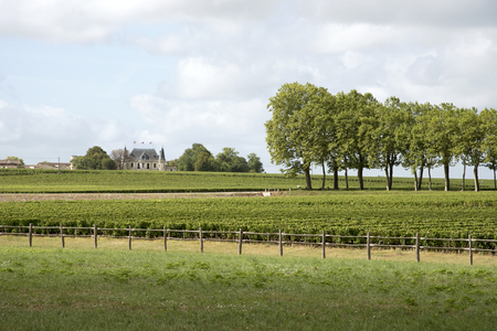 bordeaux region: Margaux Bordeaux France - August 2016 - The historic Chateau Palmer seen across the vines of Margaux in the Bordeaux region of France Editorial