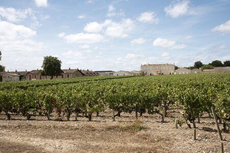 bordeaux region: Saint Julien Bordeaux France - August 2016 - Chateau Branaire Ducru and vines in Saint Julien situated along the wine route of the Medoc in the Bordeaux region of France