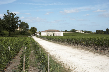 bordeaux region: Pauillac wine region France - August 2016 - Chateau Haut Bages Liberal the vines and vineyard in Pauillac a wine producing area of the Bordeaux region France