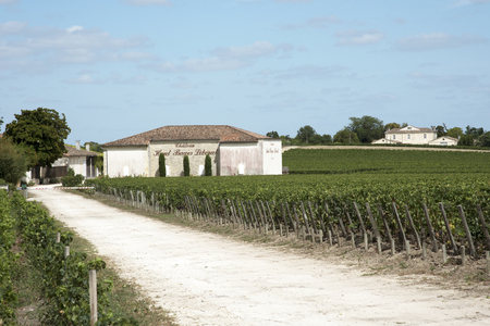 liberal: Pauillac wine region France - August 2016 - Chateau Haut Bages Liberal the vines and vineyard in Pauillac a wine producing area of the Bordeaux region France