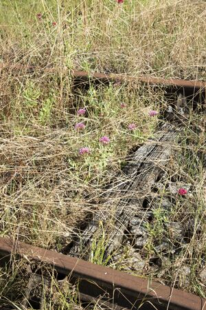 rusting: Pace Alencon France - August 2016 - Disused railroad track with rusting rails and overgrown with grass