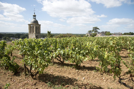 Vines and church at Vouvray France - August 2016 - The bell tower of the church of Notre Dame et Saint Jean Baptist surrounded by vines above Vouvray  in the Indre et Loire region of France