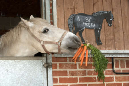 stating: A grey pony eating a bunch of carrots and a chalk board notice stating Nil by Mouth.