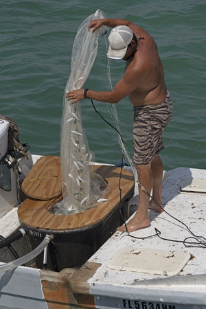 Fishing for bait using a cast net from a small boat on the Gulf of Mexico Florida USA Man landing a catch of small fish. April 2017