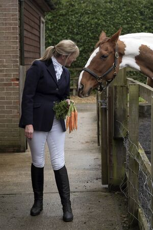 Smartly dressed female rider holding a bunch of carrots to tempt her Skewbald horse Stock Photo