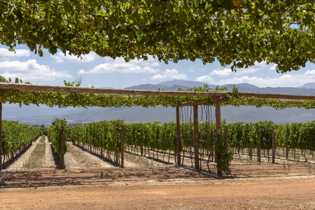 Babylonstoren near Paarl Western Cape South Africa. shade for car parking area provided by hangin vines.