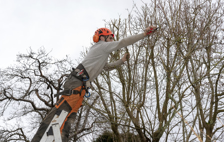 Micheldever, Winchester, Hampshire, England, UK.  Tree surgeon trimming a tree from a ladder. Stock Photo