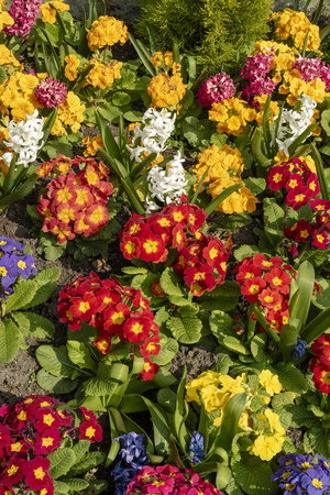 A colourful display of early spring flowers.