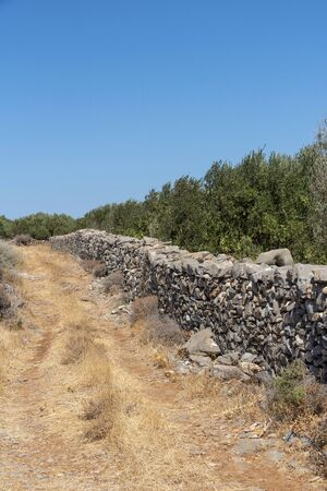 Kato Seles, northern Crete, Greece. October 2019.  Olive trees growing within ironstone walls close to Seles in Northern Crete