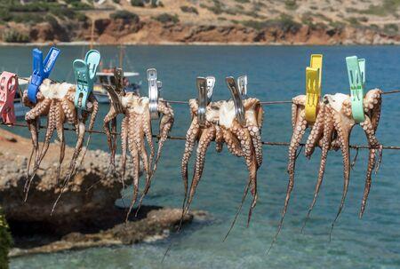 Plaka, Crete, Greece. October 2019.  Octopus pegged to a line dry in the hote Cretan sunshine in Plaka.