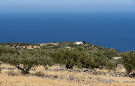 Kato Seles, northern Crete, Greece. October 2019.  Olive trees on a grove facing the Sea of Create at Seles, northern Crete. A small church on the clifftop Editorial