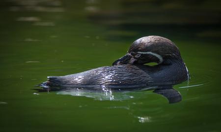 penguin floating Stock Photo