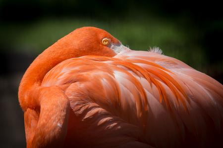 rode flamingo rusten