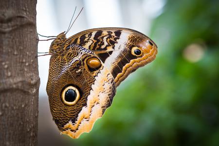 vlinder op een tak Stockfoto