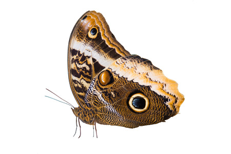 prachtige vlinder geïsoleerd op een witte achtergrond Stockfoto