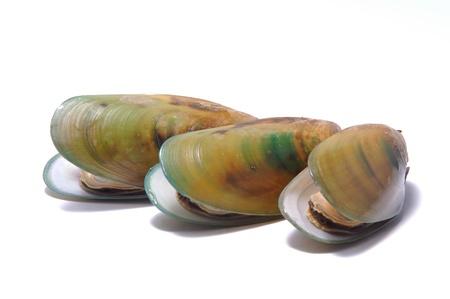 mejillones: mejillones de labios verdes sobre fondo blanco Foto de archivo
