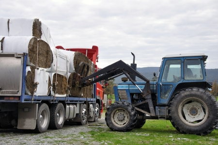 tractor unloading bales of hay from truck photo