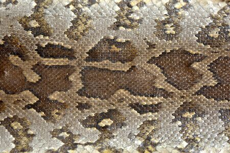 pythons: Camouflage pattern on python skin Stock Photo