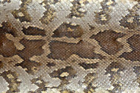 boas: Camouflage pattern su pelle di pitone