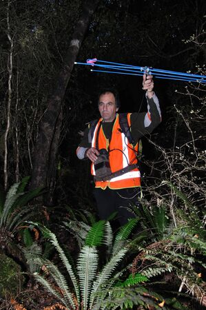Man uses tracking equipment to locate common brushtail possums, Trichosurus vulpecula, fitten with locating beacons, Westland, New Zealand