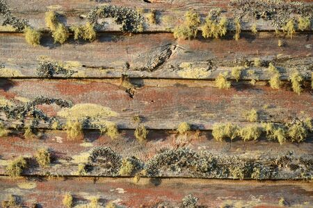 landuse: Lichens growing on an old barn on a farm in South Westland, New Zealand