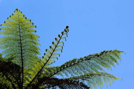 frond: background of an iconic New Zealand fern frond.