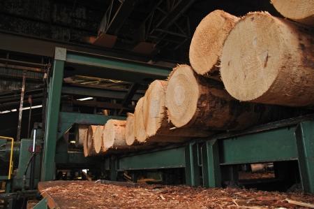 合板工場で材突き板ストリッパーの準備ができて並んでマツ丸太