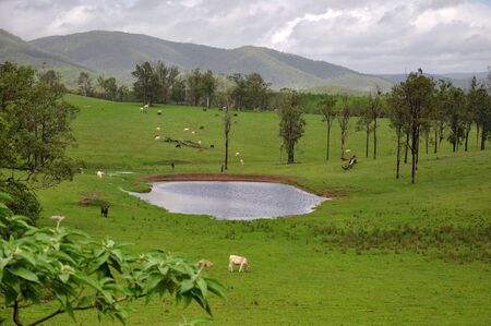 landuse: Full dams and green pasture mark the end of drought in south-east Queensland Stock Photo