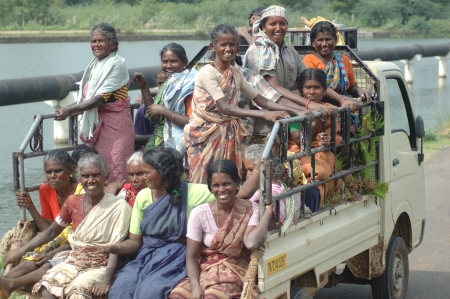 TAMIL NADU, INDIA, circa 2009: Unidentified women heading out in an overloaded vehicle to work in the rice paddies circa 2009 in Tamil Nadu, India