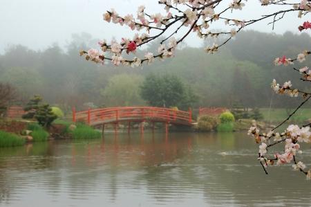 nikki bridges in japanese garden toowoomba queensland australia photo