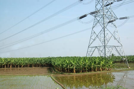 Traditional rice paddies, banana plantation and power lines in Tamil Nadu, South India Stock Photo