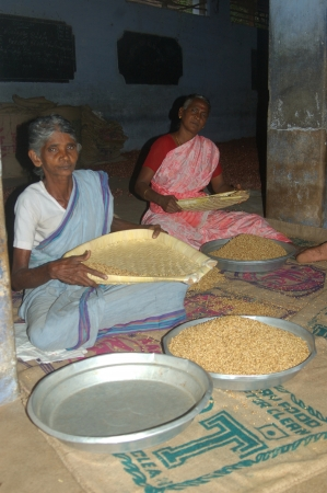 threshing: TAMIL NADU, INDIA, circa 2009: Unidentified women cleaning rice for sale, circa 2009 in Tamil Nadu, India. Much of Indias economy still relies on hand tools and skilled tradesmen.