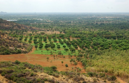south india: Farming area in Tamil Nadu, South India, with teak trees in foreground, and mango trees behind