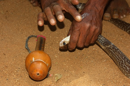 venom: Snake catcher rubs a few drops of Indian cobra venom on the back of his hand till the venom froths up, Tamil Nadu, South India Stock Photo