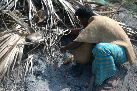 reaches: TIRUNELVELI, TAMIL NADU, INDIA,  FEBRUARY 28, 2009: Snake catcher reaches under the leaves for a snake on February 28, 2009 in Tamil Nadu, South India. Snakes are released in a protected area.