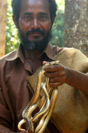 reptillian: TIRUNELVELI, TAMIL NADU, INDIA,  FEBRUARY 28, 2009: Snake catcher with a handful of young vipers on February 28, 2009 in Tamil Nadu, South India. Snakes are released in a protected area. Editorial
