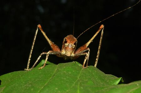 brown grasshopper from Tamil Nadu, South India. Stock Photo - 20846295