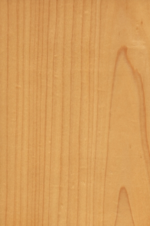 acer saccharum: background of wood grain from Hard Maple, Acer saccharum, aka as Sugar Maple, Rock Maple, from Northeastern North America Stock Photo