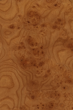 grain of burr elm, prized by wood turners for its unique grain photo