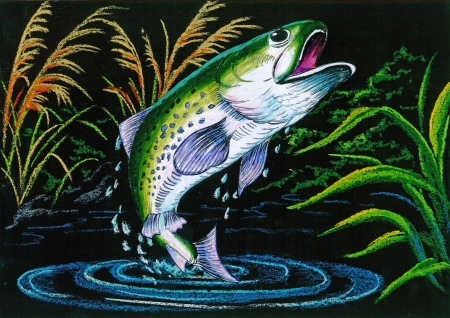 Crayon rendering on black background of a trout jumping out of the water