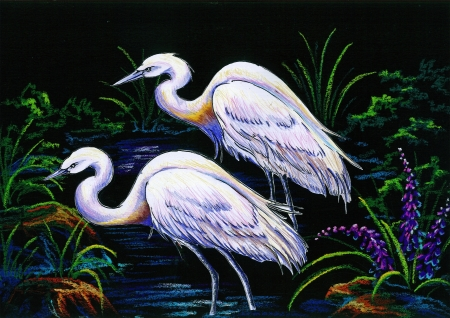 Crayon rendering on black background of a two white herons wading in water