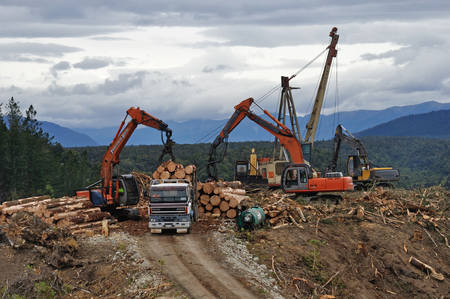 A digger loads a truck with freshly sawn Pinus radiata logs at a milling site