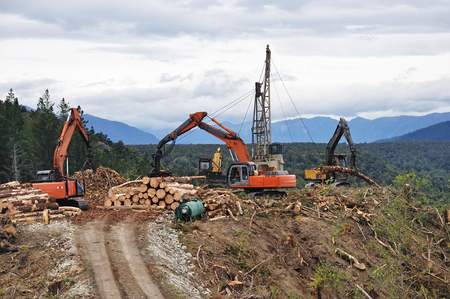 hauler: A timber hauler drags Pinus radiata logs to a loading site at a forestry block in Westland Editorial