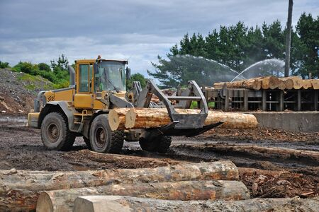 radiata: A timber loader places Pinus radiata logs at the feed-in area of a sawmill Editorial
