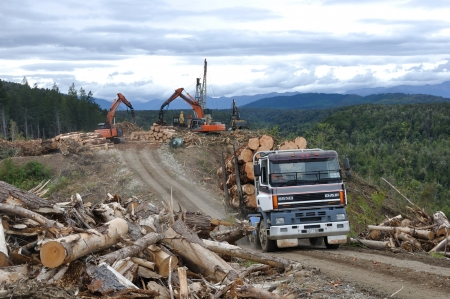 GREYMOUTH, NEW ZEALAND, NOVEMBER 28, 2013: A truck carries a load of freshly sawn Pinus radiata logs from a milling site on November 28, 2013, near Greymouth, New Zealand