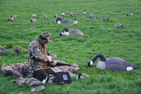 decoy: Hunter loads his gun while waiting with decoys of Canada Geese, Westland, New Zealand Stock Photo