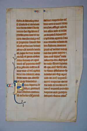 14th: Page from a 14th Century Latin Vulgate Bible, (Book of Jeremiah) written in England on vellum. (Fragment 13) From the Reed Rare Books Collection in Dunedin, New Zealand.