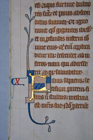 14th: Detail of a letter on a page from a 14th Century Latin Vulgate Bible, written in England on vellum.The capital letter is illuminated with gold and decorated with white tracery. (Fragment 13) From the Reed Rare Books Collection in Dunedin, New Zealand.