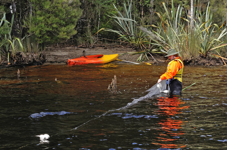 GREYMOUTH, NEW ZEALAND, FEBRUARY 12, 2014: Unidentified woman from the New Zealand Department of Conservation checks a set net for evidence of pest fish such as Rudd and Carp in Lake Haupiri, West Coast, South Island, New Zealand